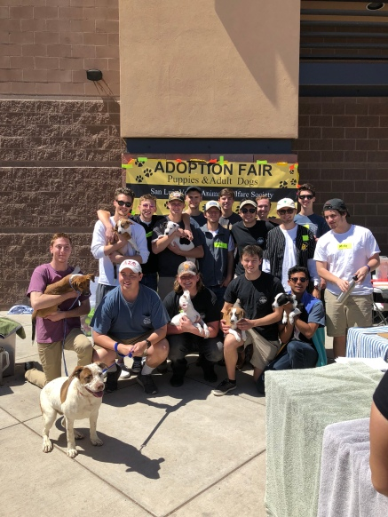Adoption Fair - April 2018